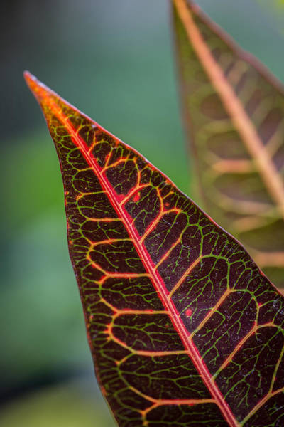 Wall Art - Photograph - Leaf Designs by Dale Kincaid