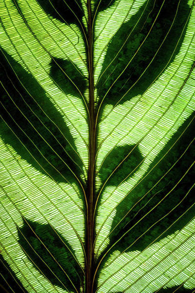 Photograph - Leaf Detail by Christopher Johnson