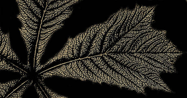 Natural Elements Photograph - Leaf Detail by Martin Newman