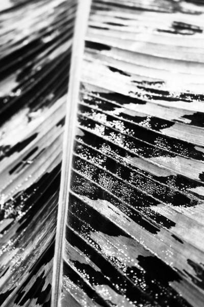 Photograph - Leaf by Fine Arts