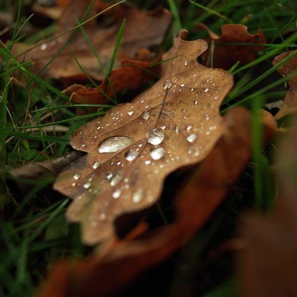 Dripping Water Photograph - Leaf In Autumn. by Bernard Jaubert