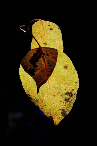 Photograph - Leaf In Time by David Matthews