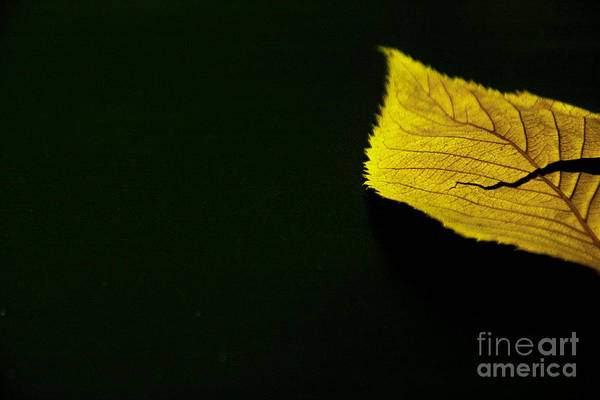 Photograph - Leaf by Eena Bo