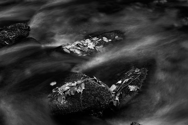 Nantahala Photograph - Leaf Island In Black And White by Greg and Chrystal Mimbs