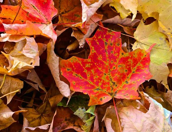 Photograph - Leaf Litter by Polly Castor
