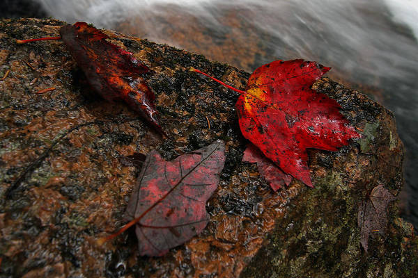Photograph - Leaf Macro by Juergen Roth