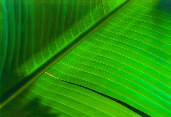 Photograph - Leaf Me Alone by Paul Wear