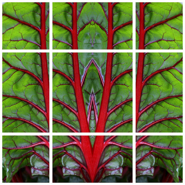 Photograph - Leaf Of Life by Debi Dalio