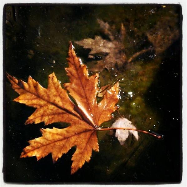 Photograph - #leaf  On #frozen #pond #backyard by Tammy Winand