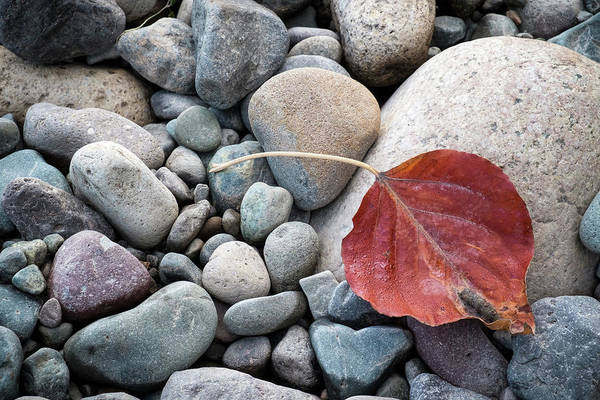 Photograph - Leaf On River Rocks by Mary Lee Dereske