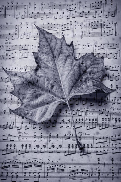 Fallen Leaves Photograph - Leaf On Sheet Music In Black And White by Garry Gay