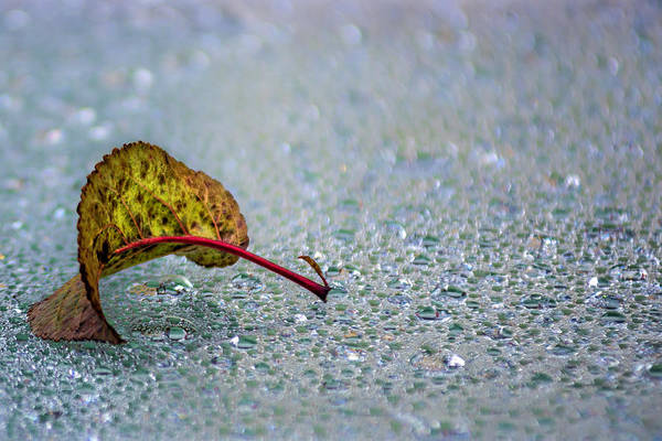 Photograph - Leaf On Water Drops by Wolfgang Stocker