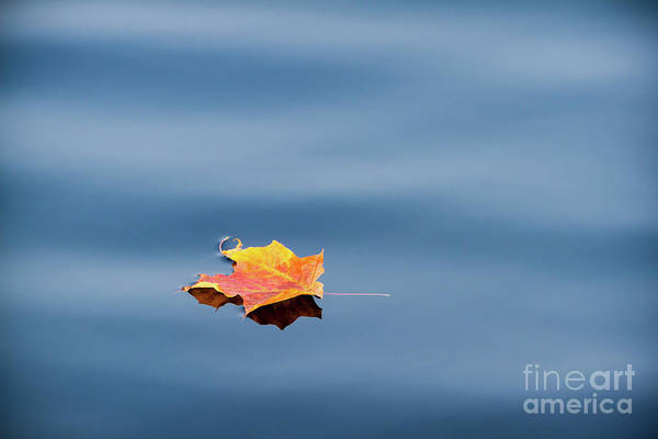 Photograph - Leaf On Water by Lori Dobbs