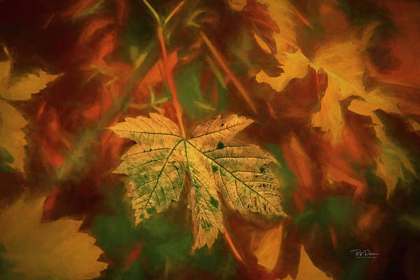 Photograph - Leaf Portrait by Bill Posner
