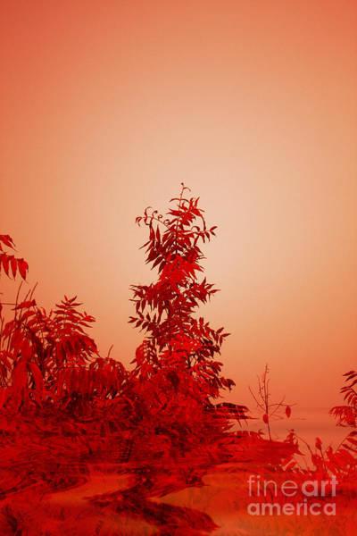 Photograph - Leaf Reflections by Elaine Teague