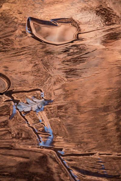 Photograph - Leaf Skitter by Deborah Hughes