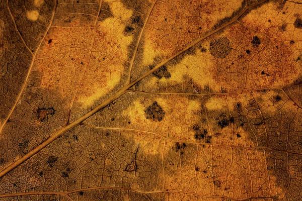 Photograph - Leaf Study 10 by Marzena Grabczynska Lorenc