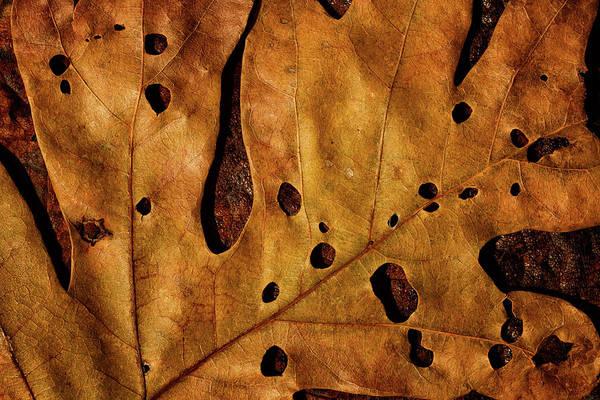 Photograph - Leaf Study 14 by Marzena Grabczynska Lorenc