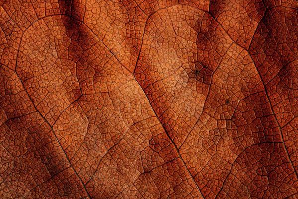 Photograph - Leaf Study 6 by Marzena Grabczynska Lorenc