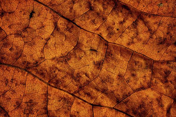 Photograph - Leaf Study 8 by Marzena Grabczynska Lorenc