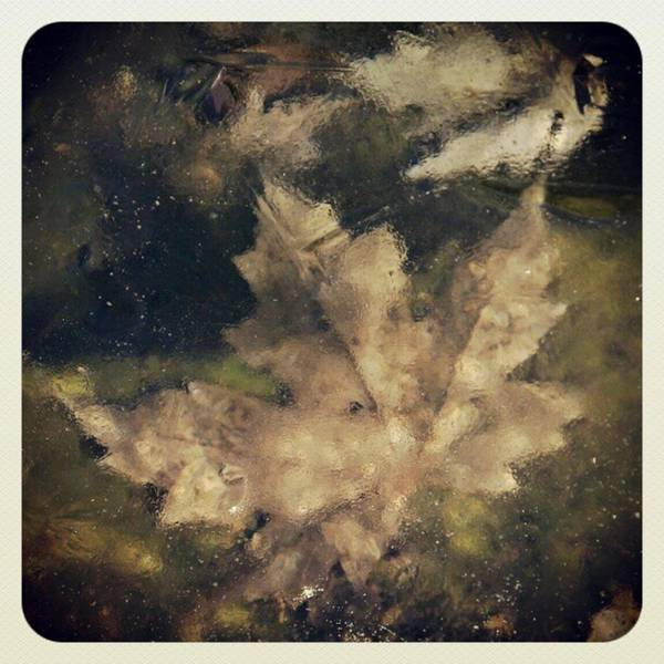 Photograph - #leaf Trapped In #ice On Fishpond by Tammy Winand