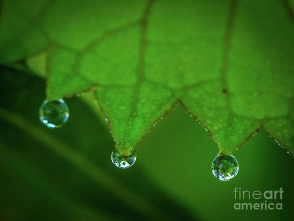 Photograph - Leaf With Drops by Tom Claud