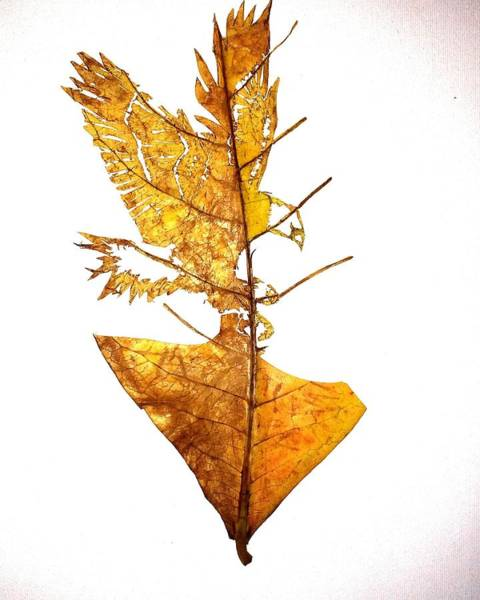 Single Leaf Mixed Media - Leafcarving by Deepan Sa