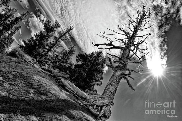 Photograph - Leafless Life by Blake Richards