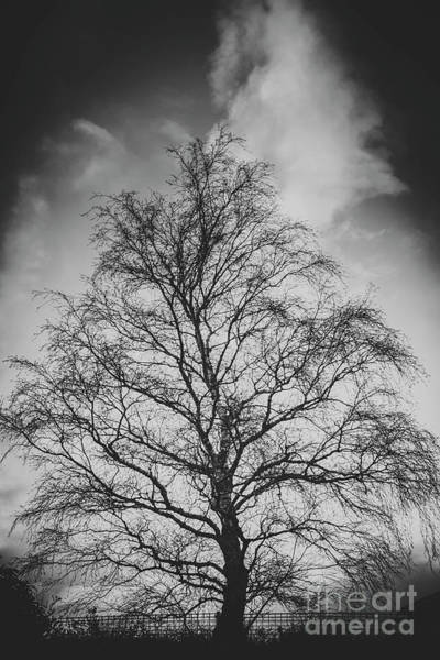 Photograph - Leafless Tree In Countryside by Jorgo Photography - Wall Art Gallery