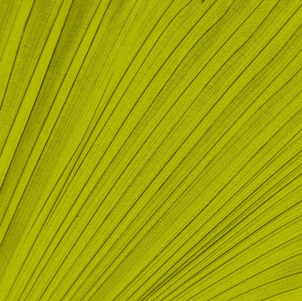 Graphic Digital Art - Leafy Leaf by Michelle Calkins
