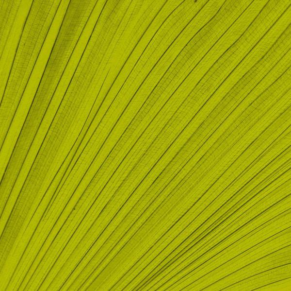 Digital Art - Leafy Leaf by Michelle Calkins