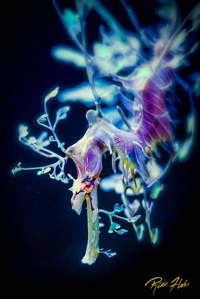 Photograph - Leafy Sea Dragon On Black by Rikk Flohr
