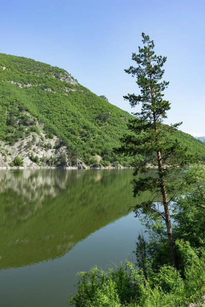 Photograph - Lean In - A Lone Pine On The Lake Shore by Georgia Mizuleva