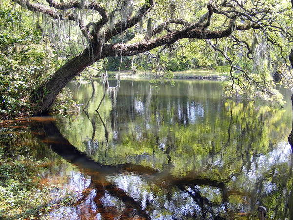 Oak Tree Photograph - Lean On Me At The Birthplace Of America by Elena Tudor