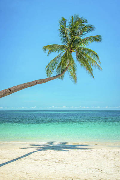 Coconut Trees Photograph - Leaning Palm Tree by Delphimages Photo Creations