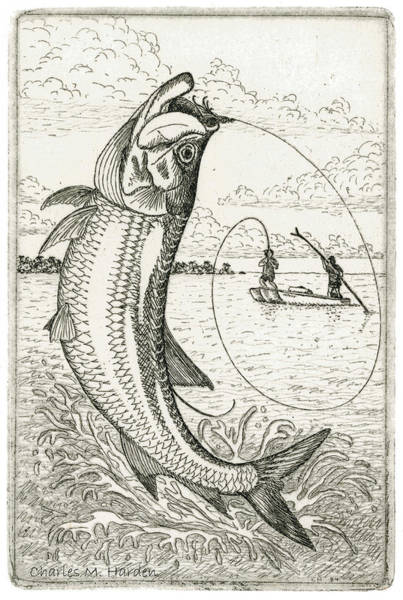 Wall Art - Drawing - Leaping Tarpon by Charles Harden