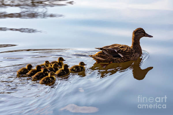 Photograph - Learning To Swim by Charles Hite