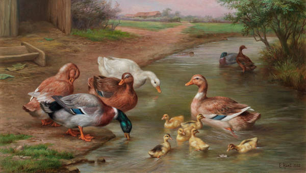 Breeding Painting - Learning To Swim by Edgar Hunt