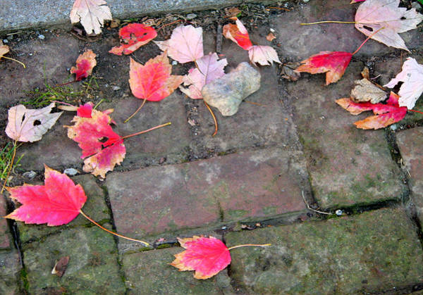 Wall Art - Photograph - Leaves 0224 by Laura Heggestad