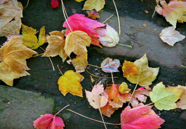 Wall Art - Photograph - Leaves 0237 by Laura Heggestad