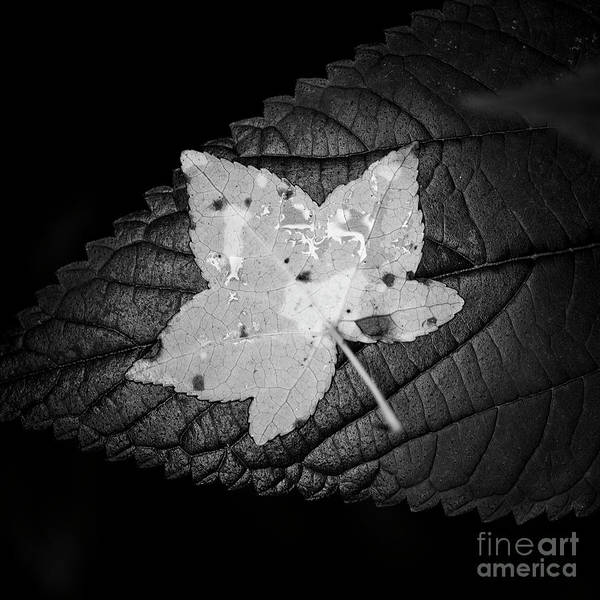 Photograph - Leaves 2 by Patrick M Lynch