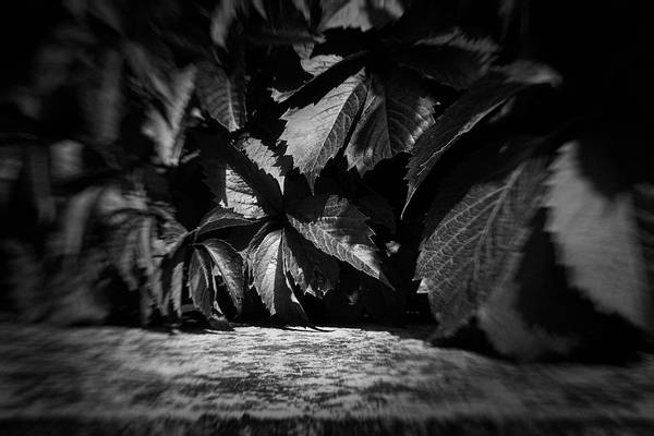 Leaves #9671 Art Print