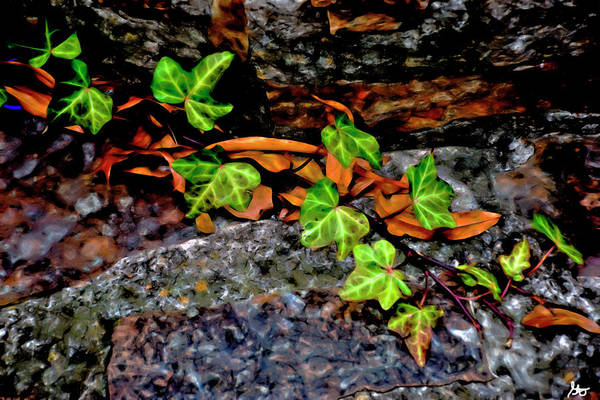 Photograph - Leaves And Ivy by Gina O'Brien