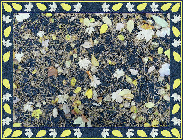 Digital Art - Leaves And Needles On Pavement With Border by Lise Winne