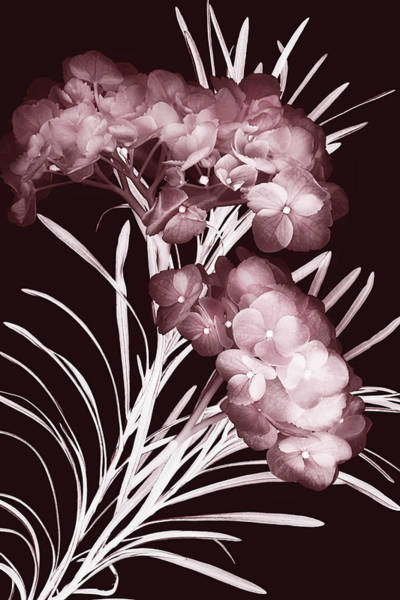 Photograph - Leaves And Petals I by Leda Robertson