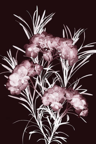 Photograph - Leaves And Petals II by Leda Robertson