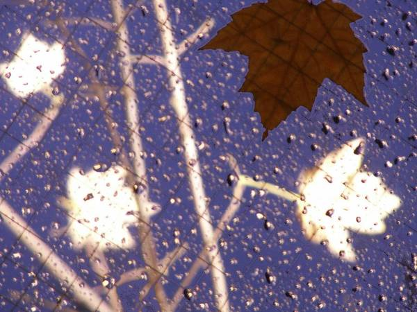 Wall Art - Photograph - Leaves And Rain 2 by Tim Allen