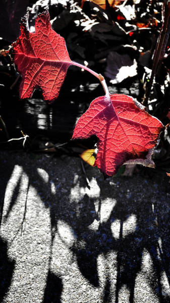 Photograph - Leaves And Shadows by George Taylor