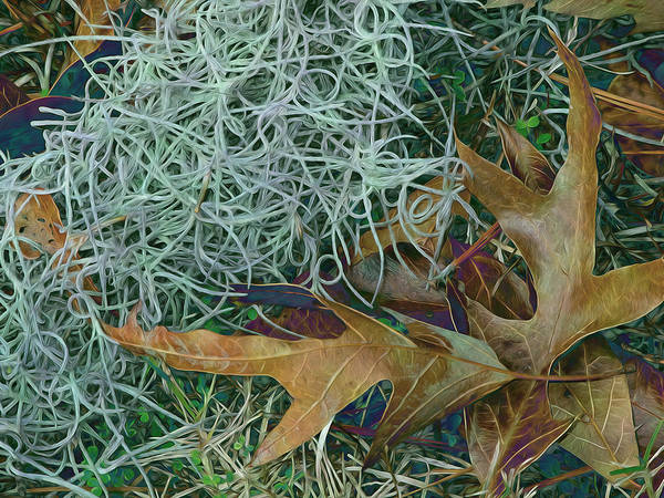 Photograph - Leaves And Tendrils by Lynda Lehmann