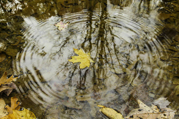 Autumn Leaves Photograph - Leaves And Water by Andrew McElvery